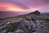 Spectacular Pink Sunrise Above Belstone Tor, Dartmoor, Devon, England. Winter