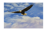 Fly High Bald Eagle