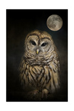 Barred Owl and the Moon