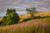 Dawn over Arthurs Seat Hillside, Edinburgh, Lothian, Scotland
