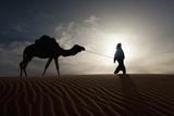 Silhouette of Berber Leading Camel across Sand Dunes at Dusk in the Erg Chebbi