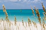 A Lone Sailboat in the Caribbean Sea Seen Through Tall Dune Grass