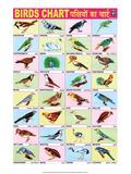 Indian Educational Chart - Birds