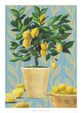 Opulent Citrus I