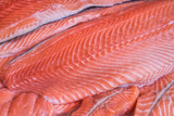 Salmon Fillets for Sale in Fish Market
