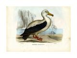 Royal Albatross, 1863-79