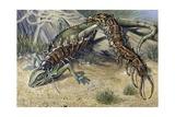 Amazonian Giant Centipede (Scolopendra Gigantea), Scolopendridae