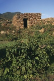 Vineyards and Dammuso, Montagna Grande, Island of Pantelleria, Sicily, Italy
