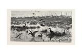 Haunts of Wild Ducks, 1882
