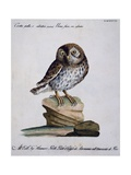 Yellow Owl, 19th Century