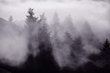 Light and Fog Play in Black and White, Nature Abstract