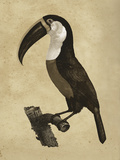 The Vintage Toucan II