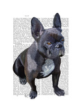 French Bulldog Plain