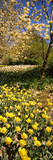 Flowers Blooming in a Park, Central Park, Manhattan, New York City, New York State, Usa