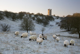 Broadway Tower and Sheep in Morning Frost, Broadway, Cotswolds, Worcestershire, England, UK