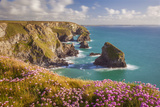 Pink Thrift Flowers, Bedruthan Steps, Newquay, Cornwall, England, United Kingdom
