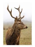 Deer During Foggy Morning