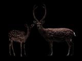 Deer, Dear