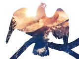 Eagle Greets the Sun