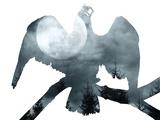 """Night Hawk"""