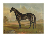 America?s Renowned Stallions, c. 1876 II