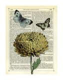 Flower & Butterflies