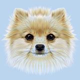 Illustrative Portrait of Pom Pom. Cute Head of a White Pomeranian Spitz Dog.