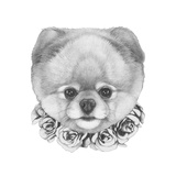 Original Drawing of Pomeranian Dog with Roses. Isolated on White Background.