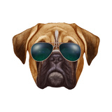Original Drawing of Boxer Dog with Sunglasses. Isolated on White Background.