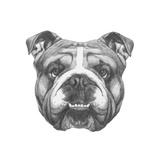 Original Drawing of English Bulldog. Isolated on White Background
