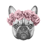 Original Drawing of French Bulldog with Roses. Isolated on White Background