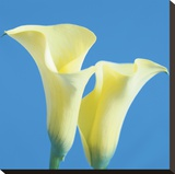 Lily Bloom V