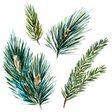 Watercolor Fir Tree Branches