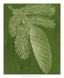 Modern Pine IV