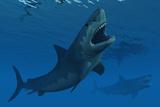 A Giant Megalodon Shark During the Cenozoic Era of Time