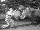 Zookeeper Giving Hippo Bundle of Hay