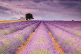 Stone House in Lavender Field