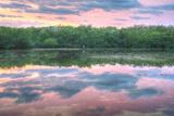 Heron and Mangroves