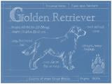 Blueprint Golden Retriever
