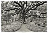 Florida Tree