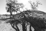 Close Up Portrait of a Fallen Tree
