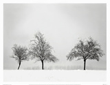 Silhouettes Of Winter II