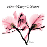 Moment Orchid