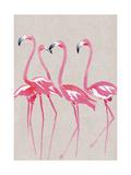 Elegant Flamingos