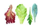 Watercolor Fresh Greens Set