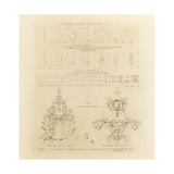 System of Architectural Ornament: Plate 2, Manipulation of the Organic, 1922-23