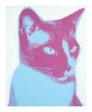Cat, 1976