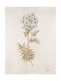 French Botanicals VI