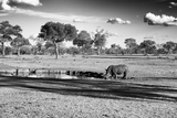 Awesome South Africa Collection B&W - Savannah View with one Black Rhino