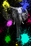 Safari Colors Pop Collection - Elephant V
